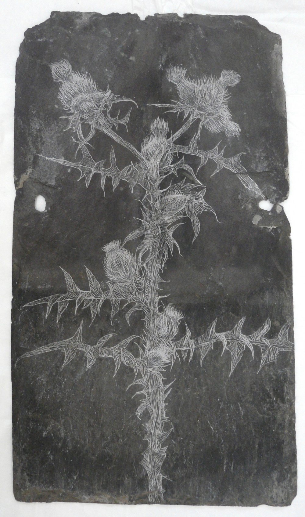 Thistle, Slate Engraving.