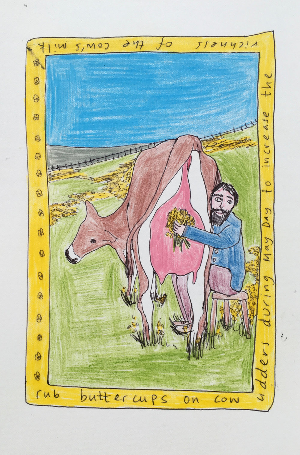 Rub buttercups on cow udders during May Day to increase the richness of the cow's milk, Plant Tales Series (Prints available).