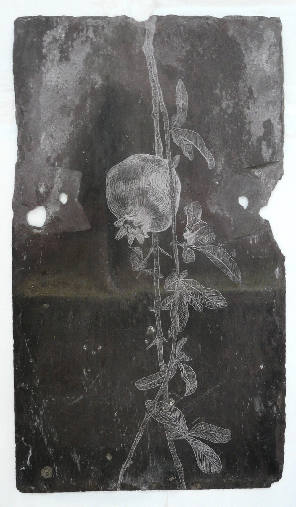 Pomegranate II, Slate Engraving.