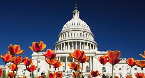 capitol_building_tulips