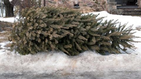 trash-tree-christmas.jpg