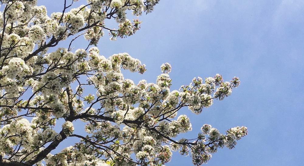 Lozidaze_Blossoms_01
