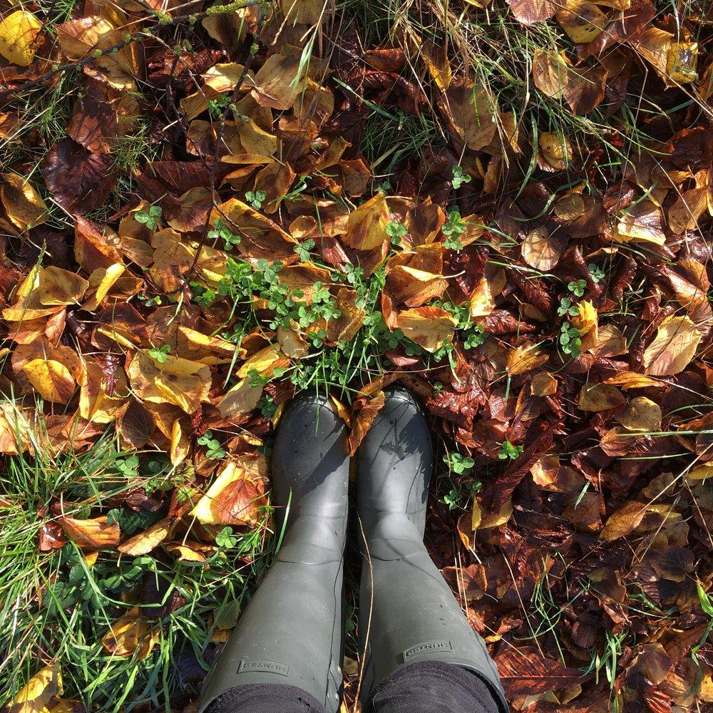 Lozidaze_Cotswolds_Autumn-Leaves_01