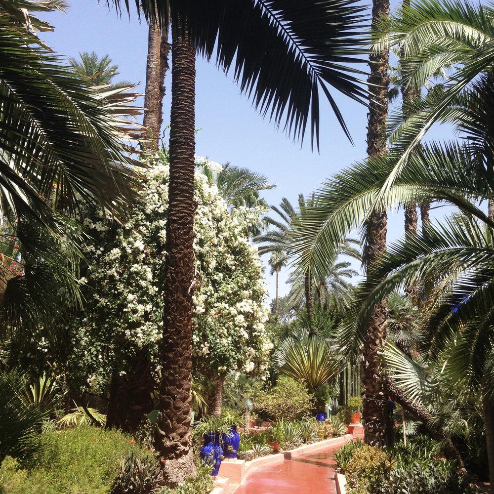 Lozidaze_Marrakesh_Jardin-Majorelle_03
