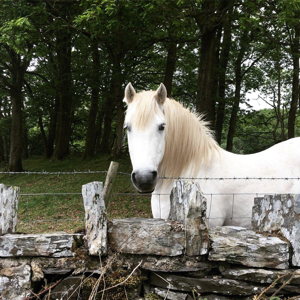 Lozidaze_LakeDistrict_Horse_01