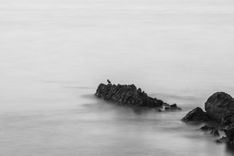 Seabird Study