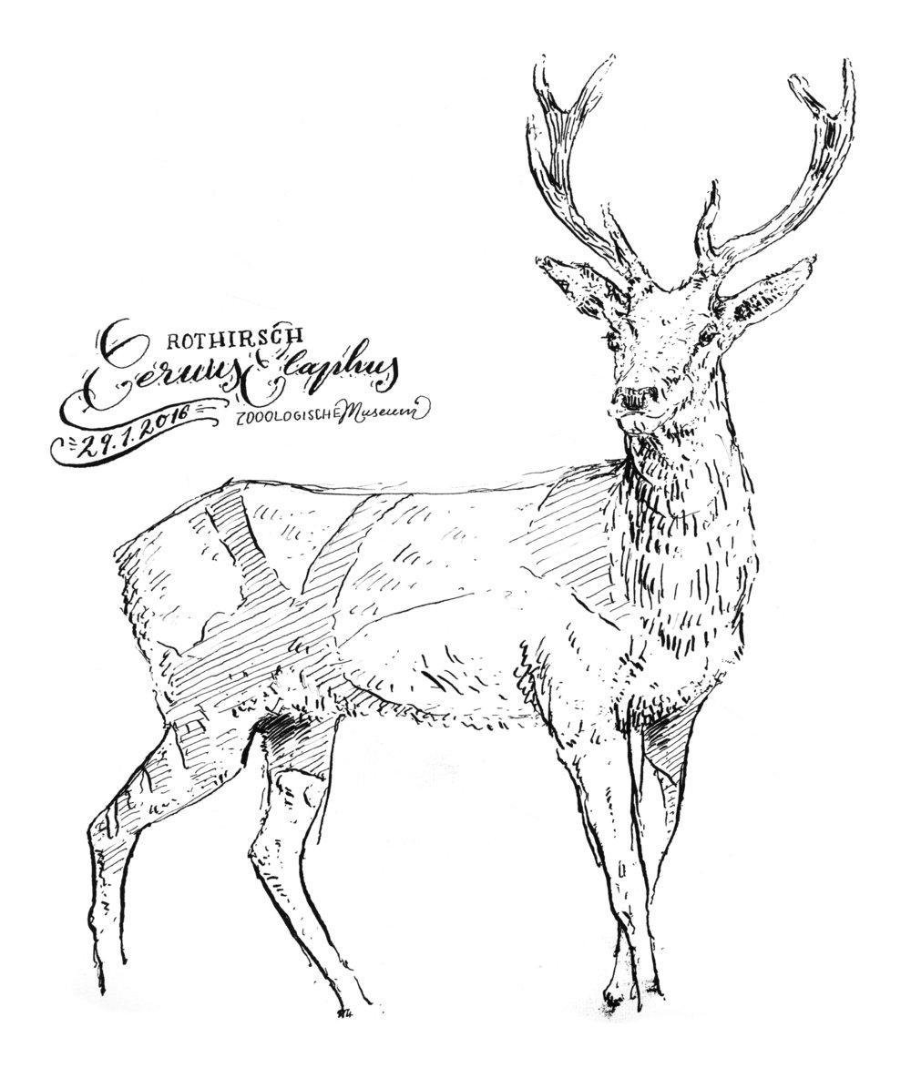 drawings_4.jpg