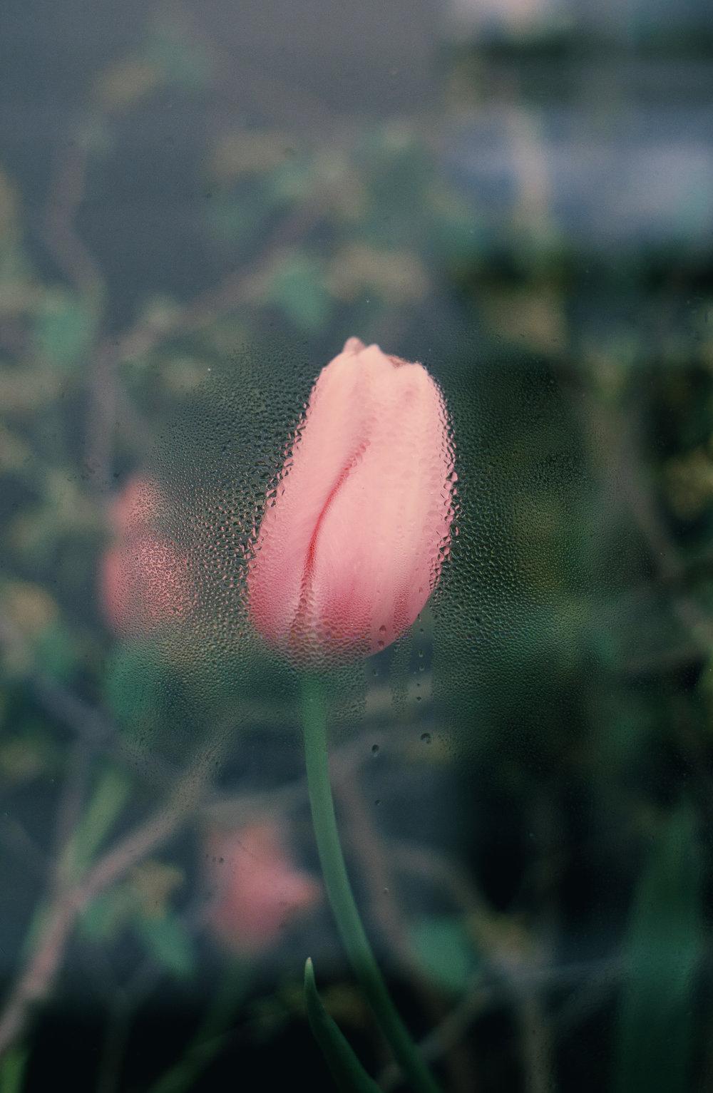"""""""Flower 1""""   2016"""