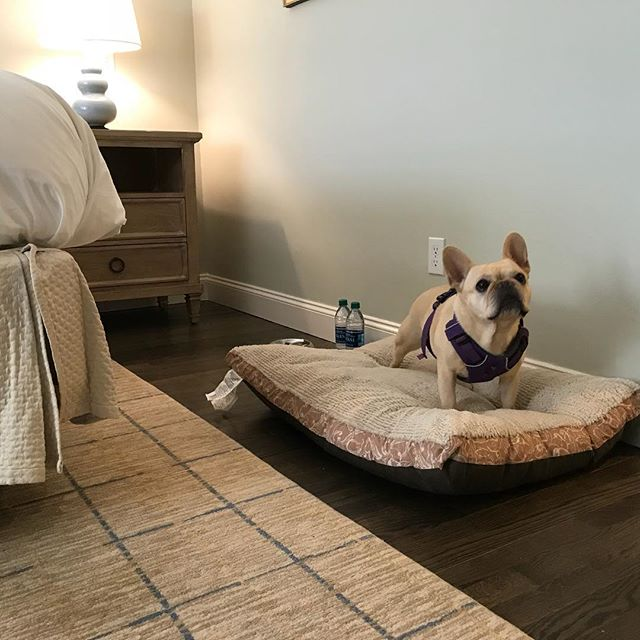 @chathambarsinn knows how to welcome their four-legged Frenchie friends. #capecod #beachday