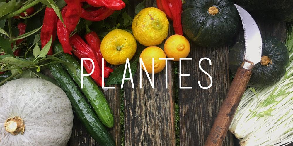 vignettes-plantes.jpg