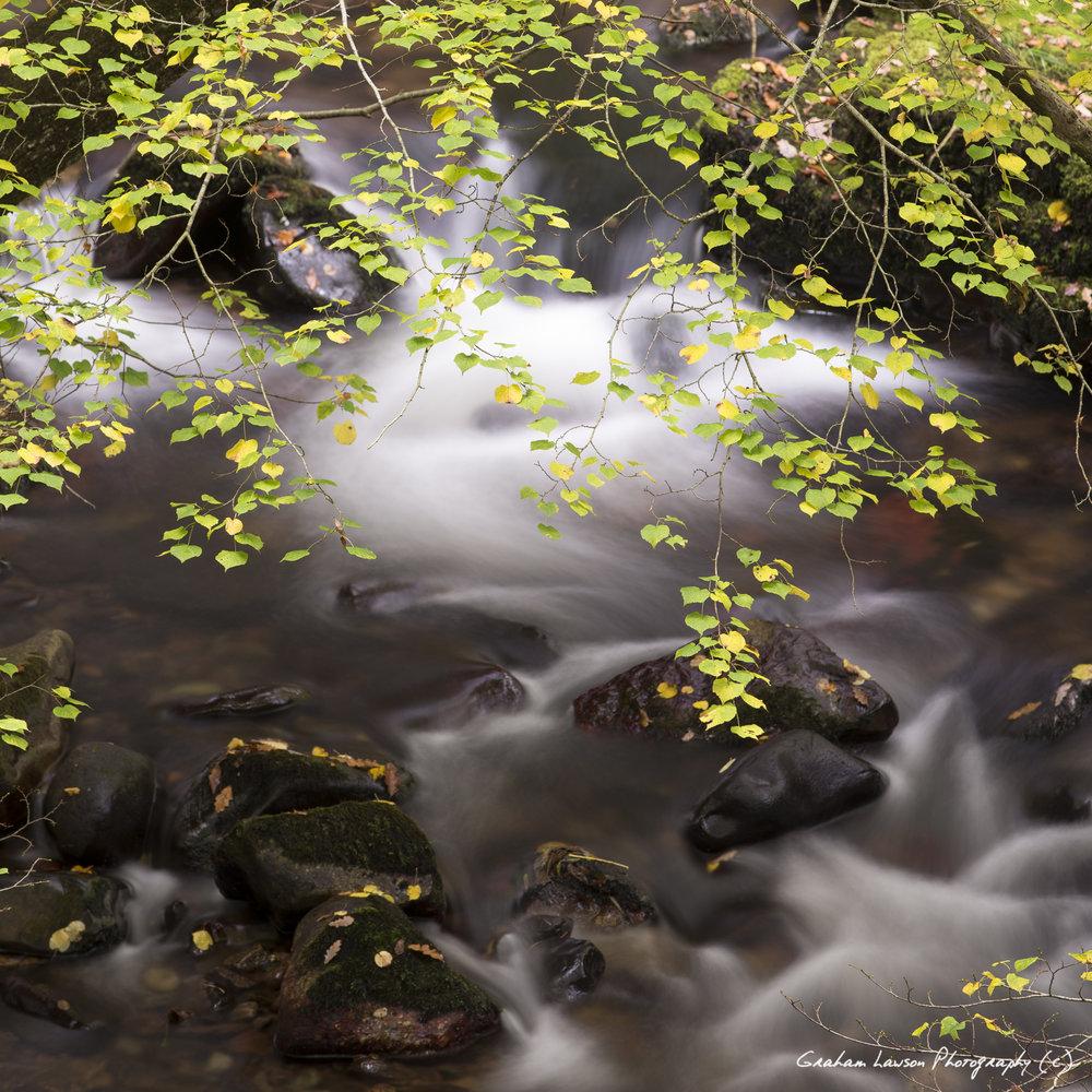 River & Leaves