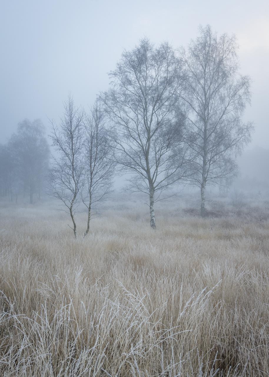 Newtown Morning (Winter).jpg