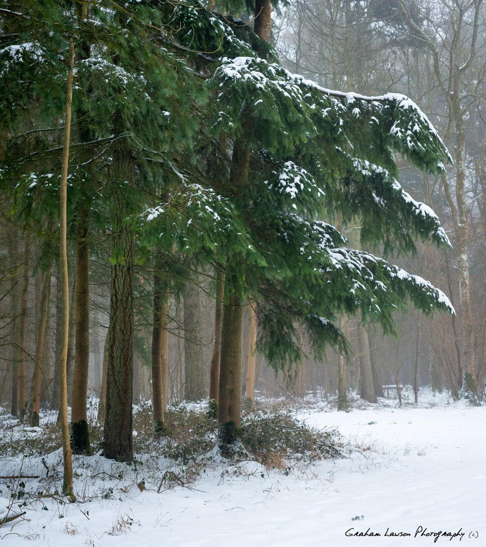 Winter Corner