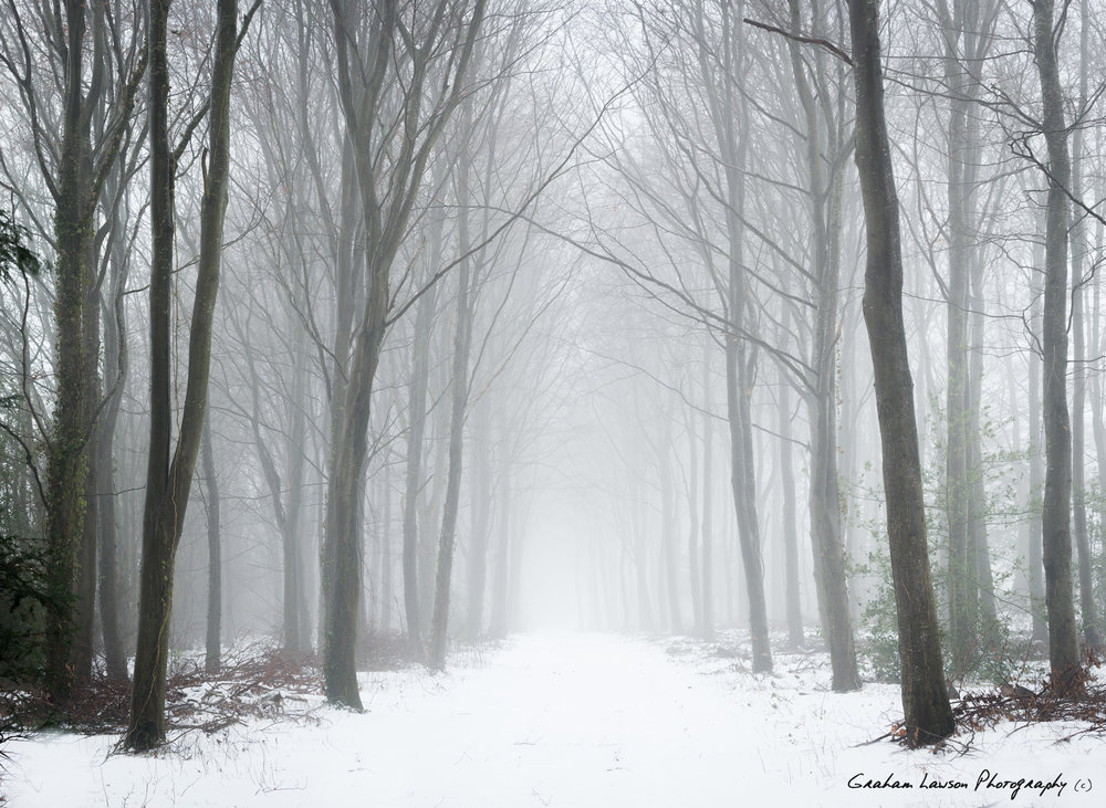 Following the Snow