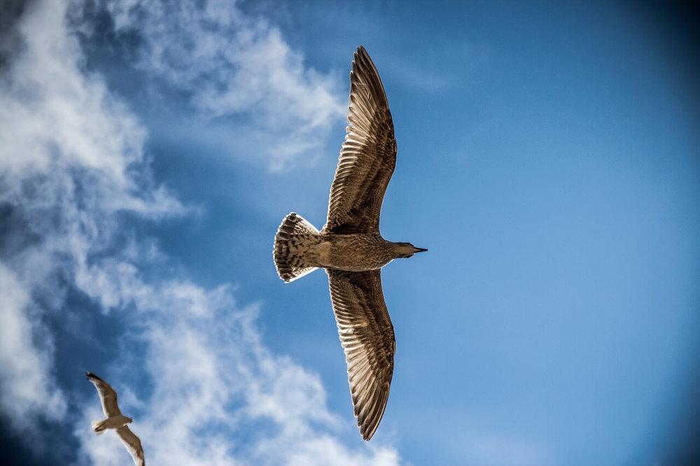 sea-gull-765490_1280.jpg