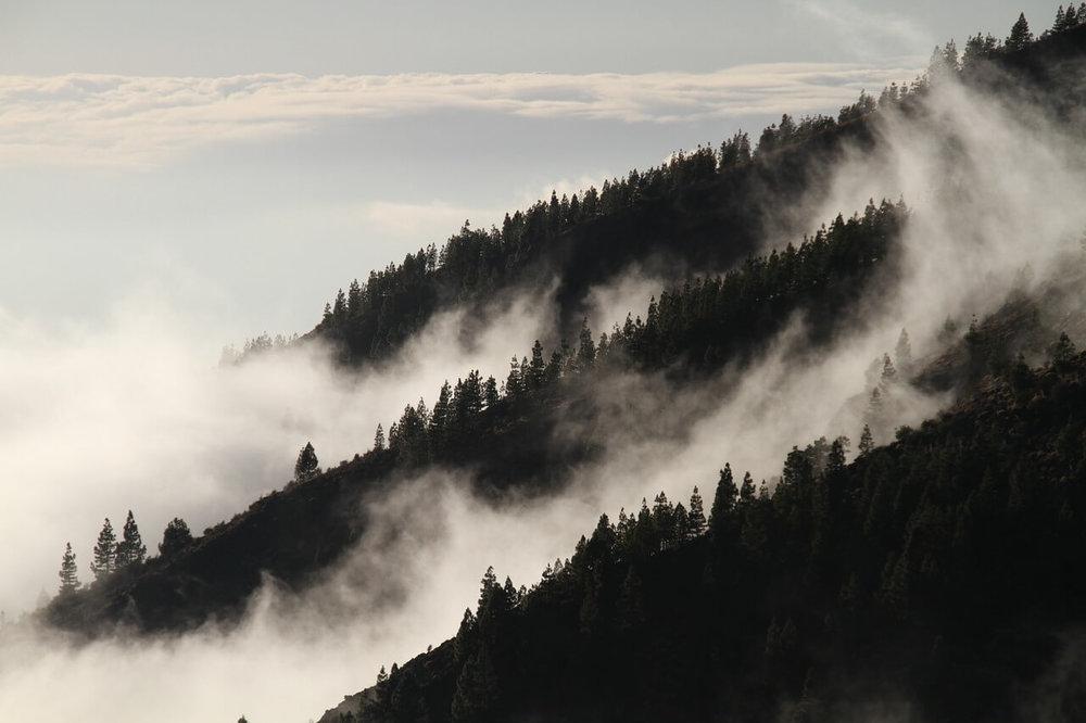 fog-1220491_1280.jpg
