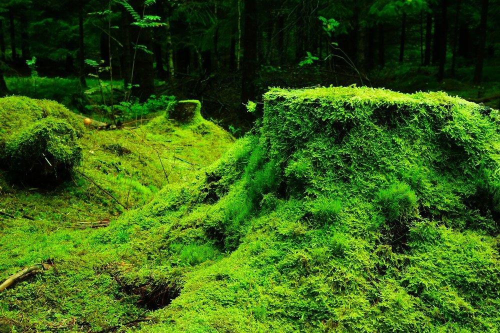 forest-483206_1280.jpg