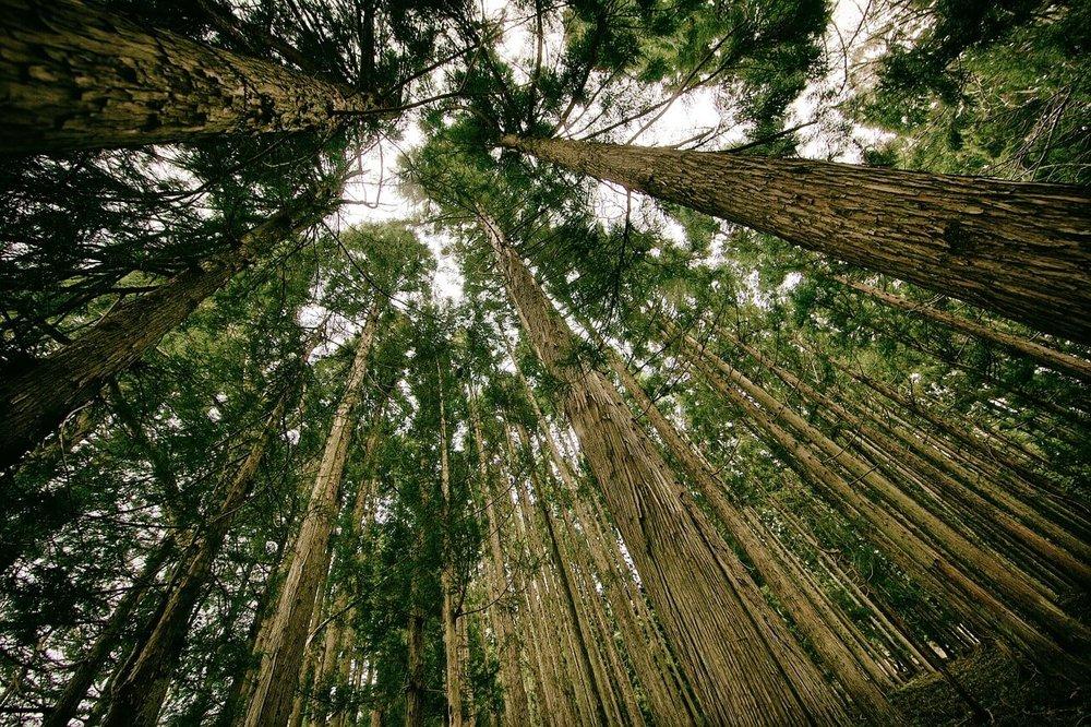 forest-505860_1280.jpg