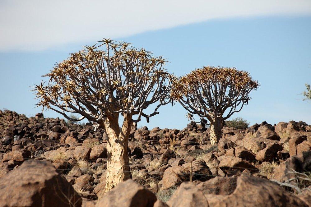 namibia-2049202_1280.jpg