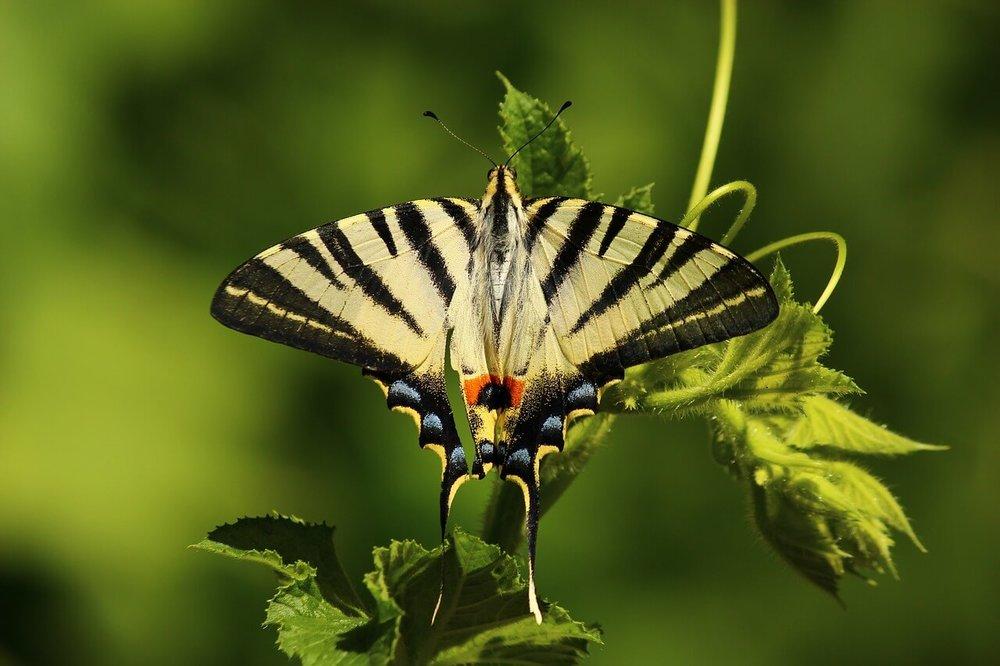 butterfly-1701685_1280.jpg