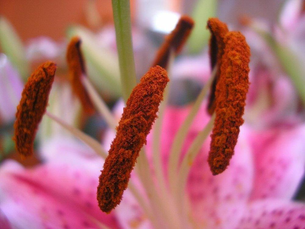 flower-624974_1280.jpg