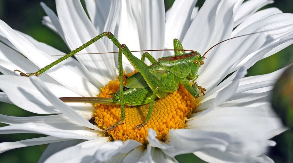 insect-1374695_1280.jpg