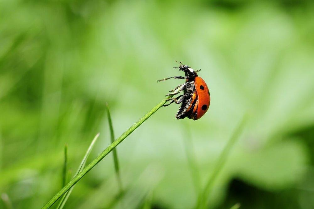 ladybug-796482_1280.jpg
