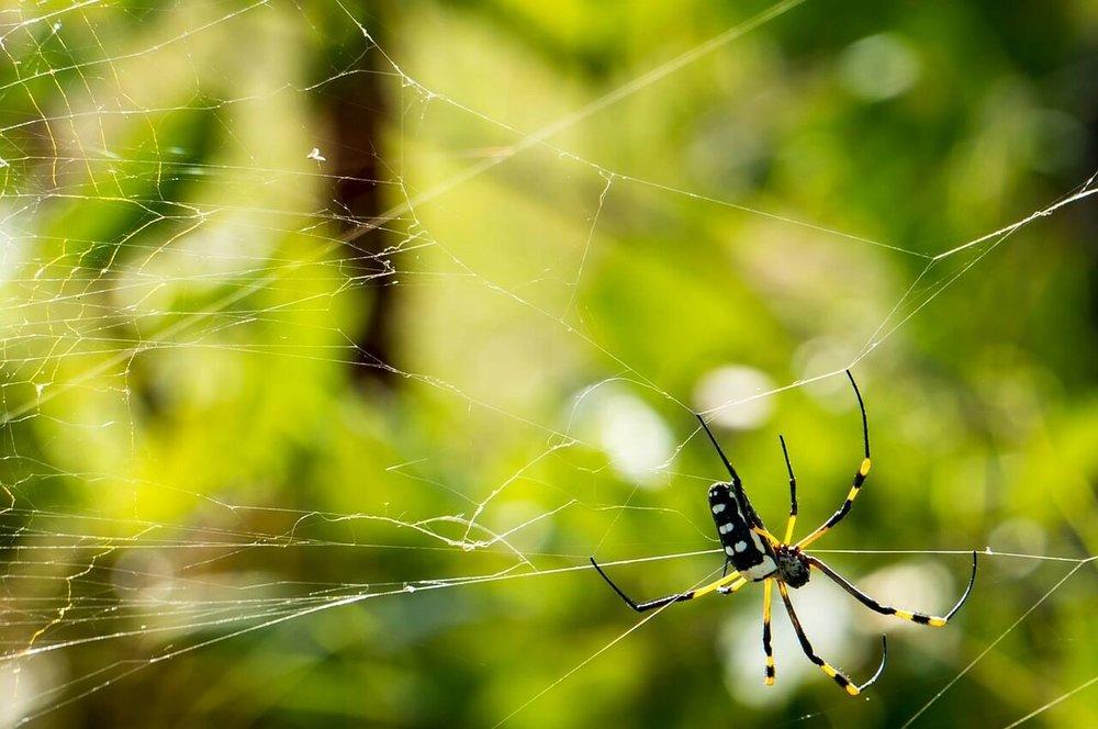 spider-229958_1280.jpg