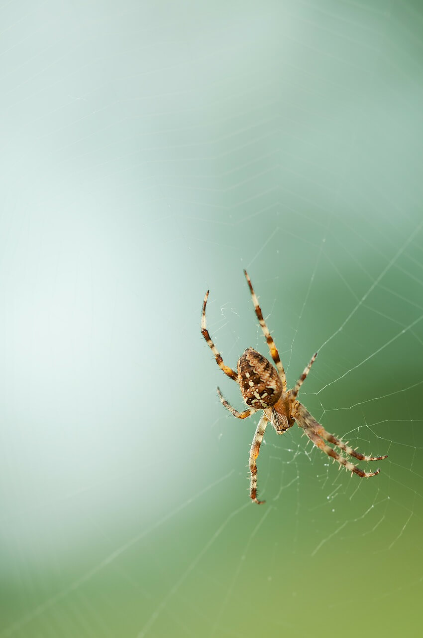 spider-208577_1280.jpg