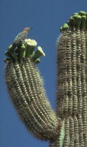 Cactus Birtd
