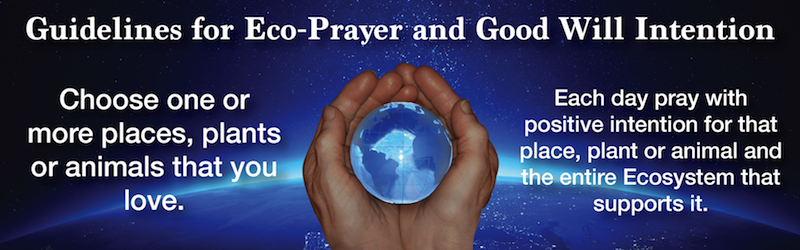 Eco-Prayer Banner