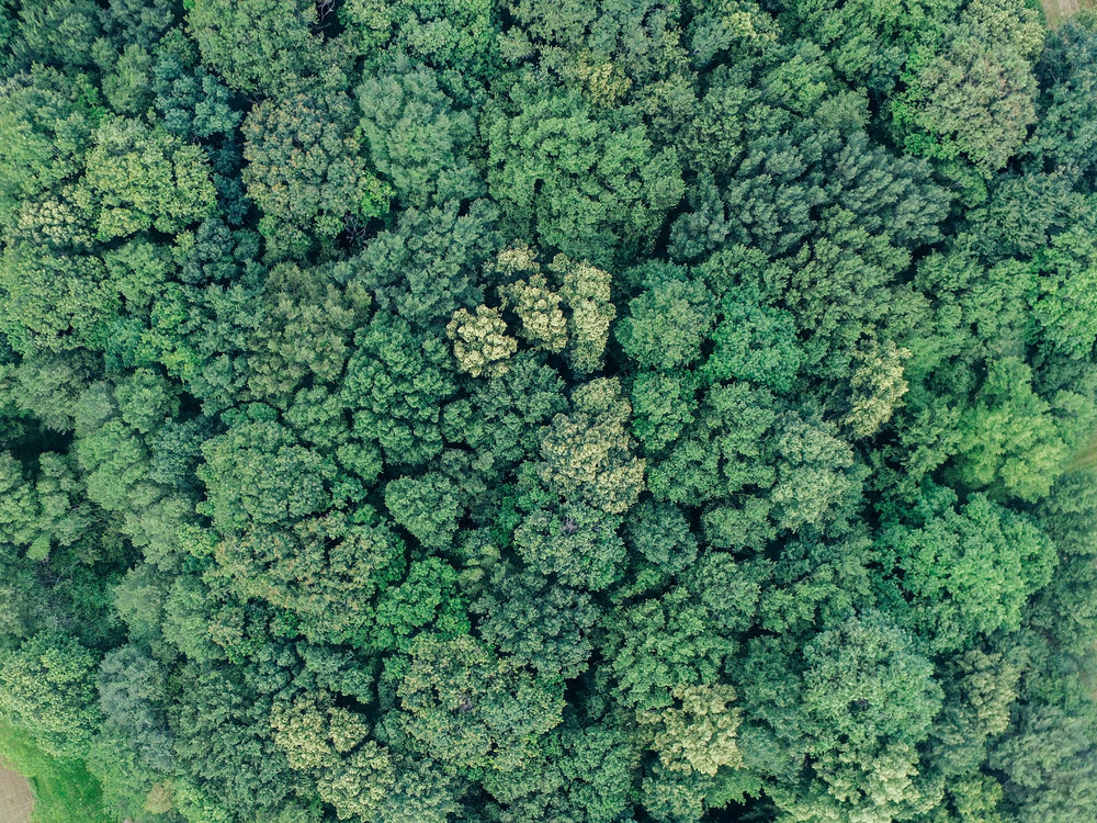 The forest from up top