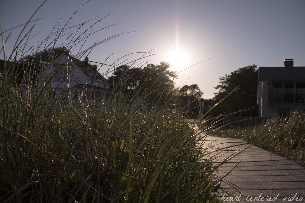 dune grass at dusk