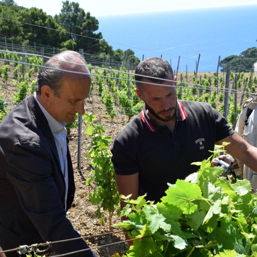 Lamberto Frescobaldi (left) and Luigi discuss vineyard practices.