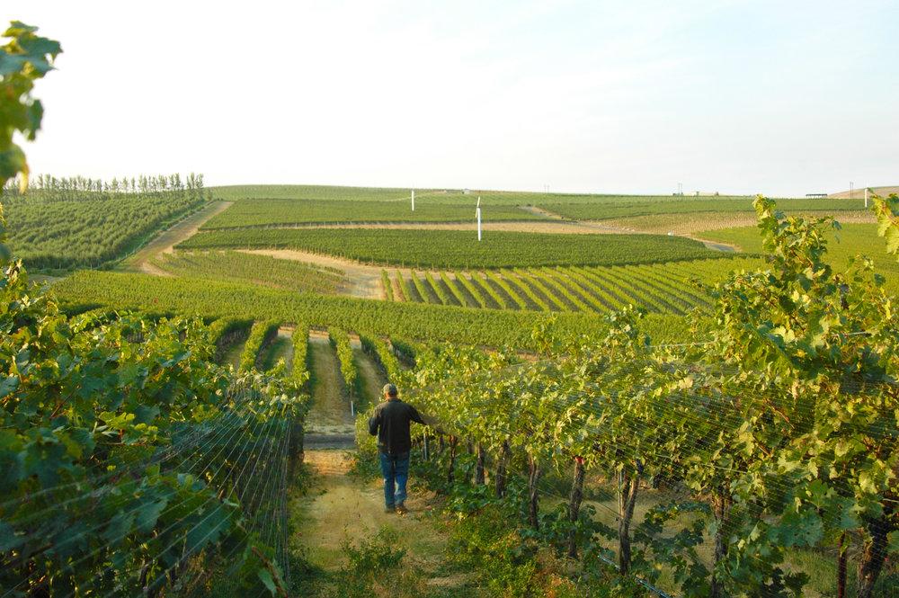 Amavi Cellars' winemaker, Jean-Francois Pellet in the vineyard