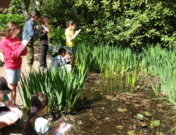 Fourth grade students studying the water cycle and affects on vegetation in a pond near their school.  Photograph courtesy of PSI: Partners in Scientific Inquiry