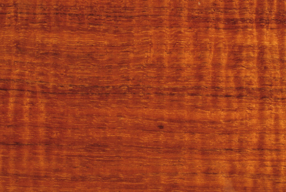 Blackwood - Blackwood is a deep brown, with ocasional red streaks and wavy bands, sometimes in a fiddbleback pattern.It has a deep brown heartwood, and is grown in the wetter areas of Tasmania for commercial use.