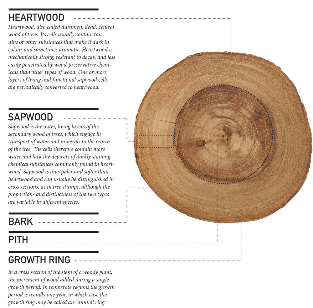 timber_anatomy.jpg
