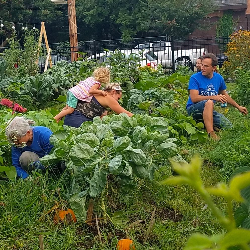 Emerald Street Community Farm -
