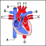hearts_thumb.png