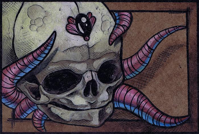 fetal_skull.jpg