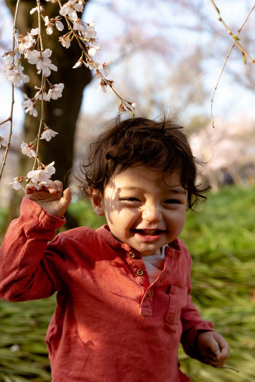 Cherry blossom photo shoot, Tokyo