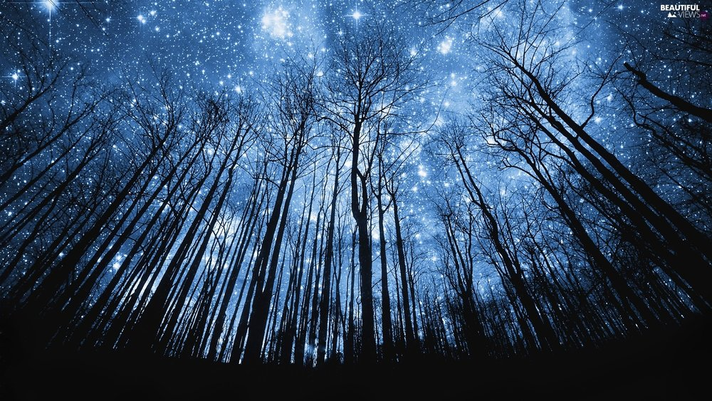 Board_05_forest-star-sky.jpg