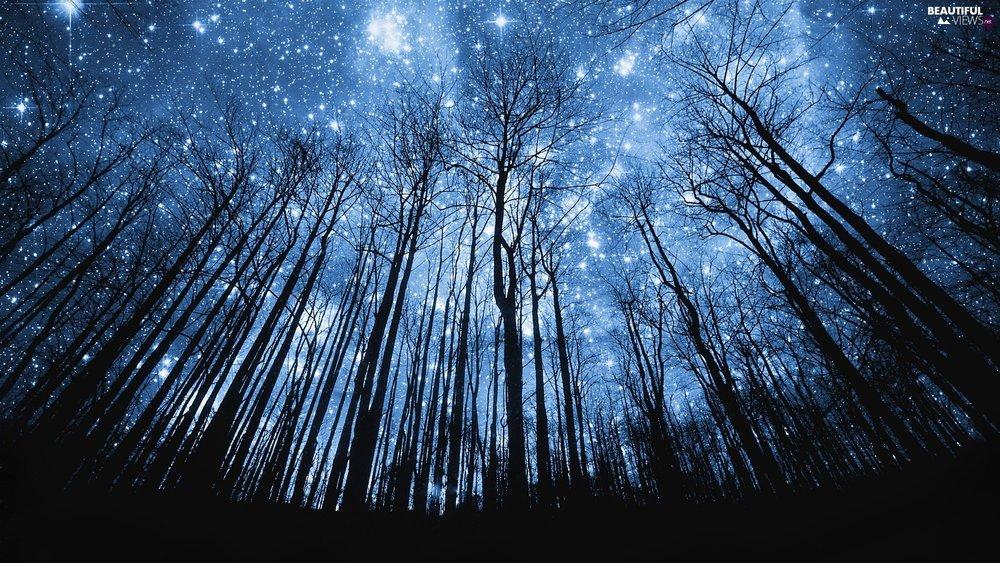 Board_05_forest-star-sky.jpg