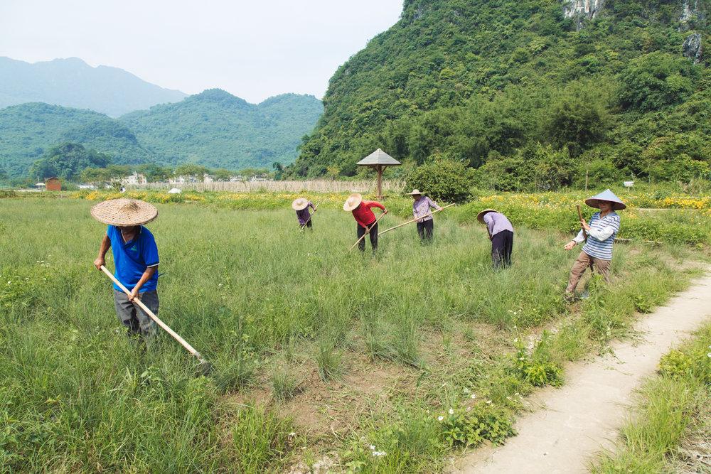 qingyuan-85.jpg