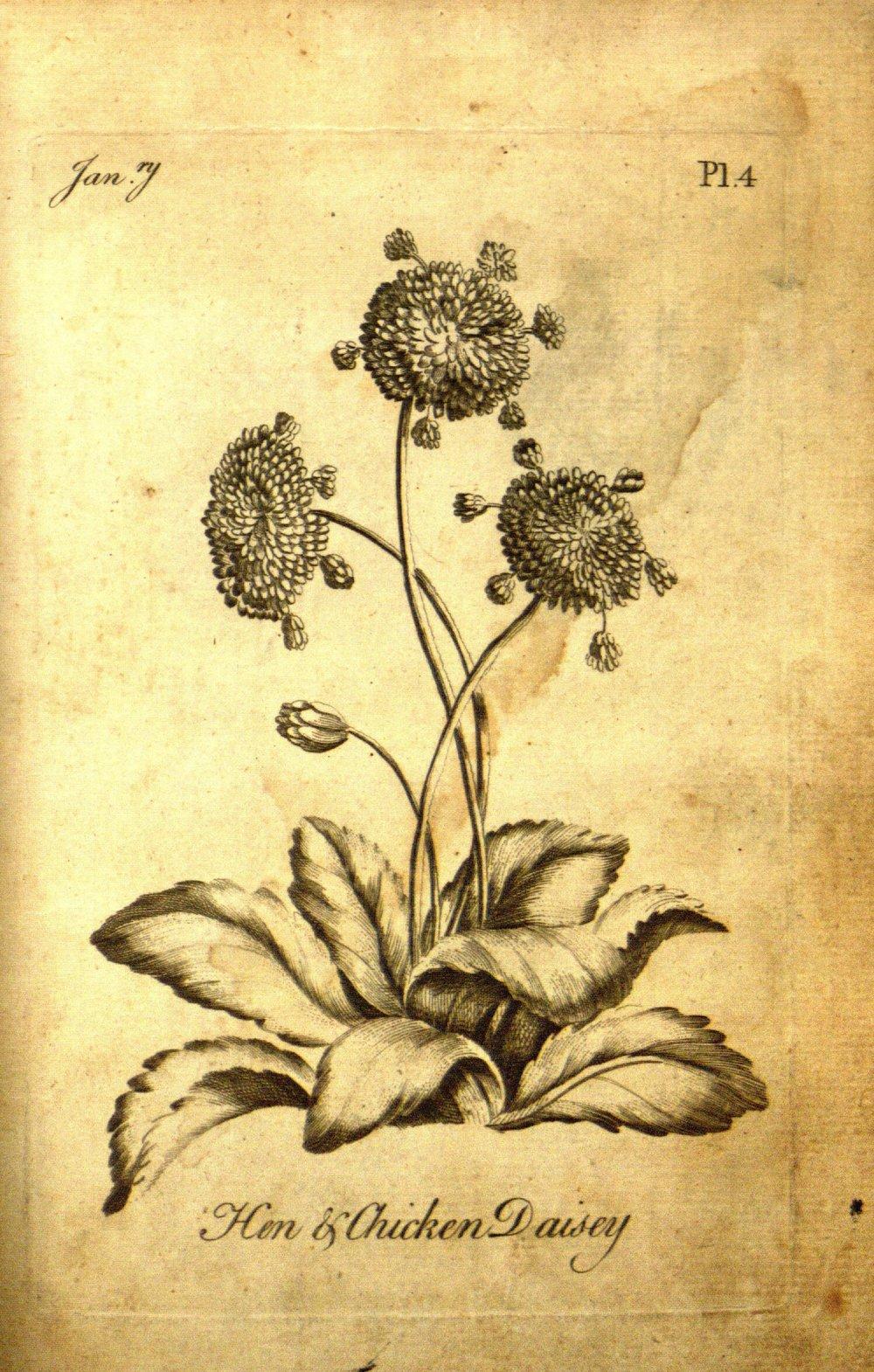 via botanicus.org