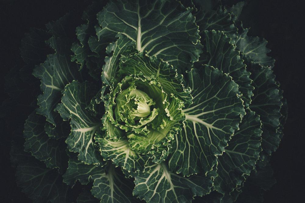 regrow veggies from scrap