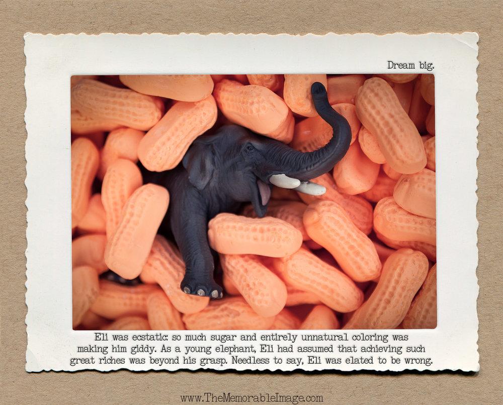 8x10 Jan_Elephant Peanuts.jpg