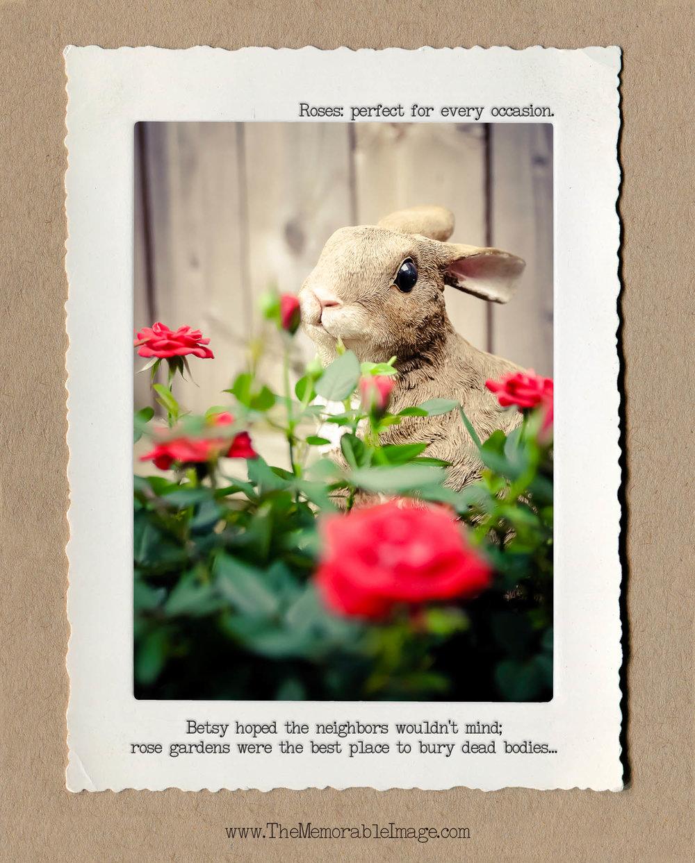 8x10_Vert_April_Rabbit Roses.jpg