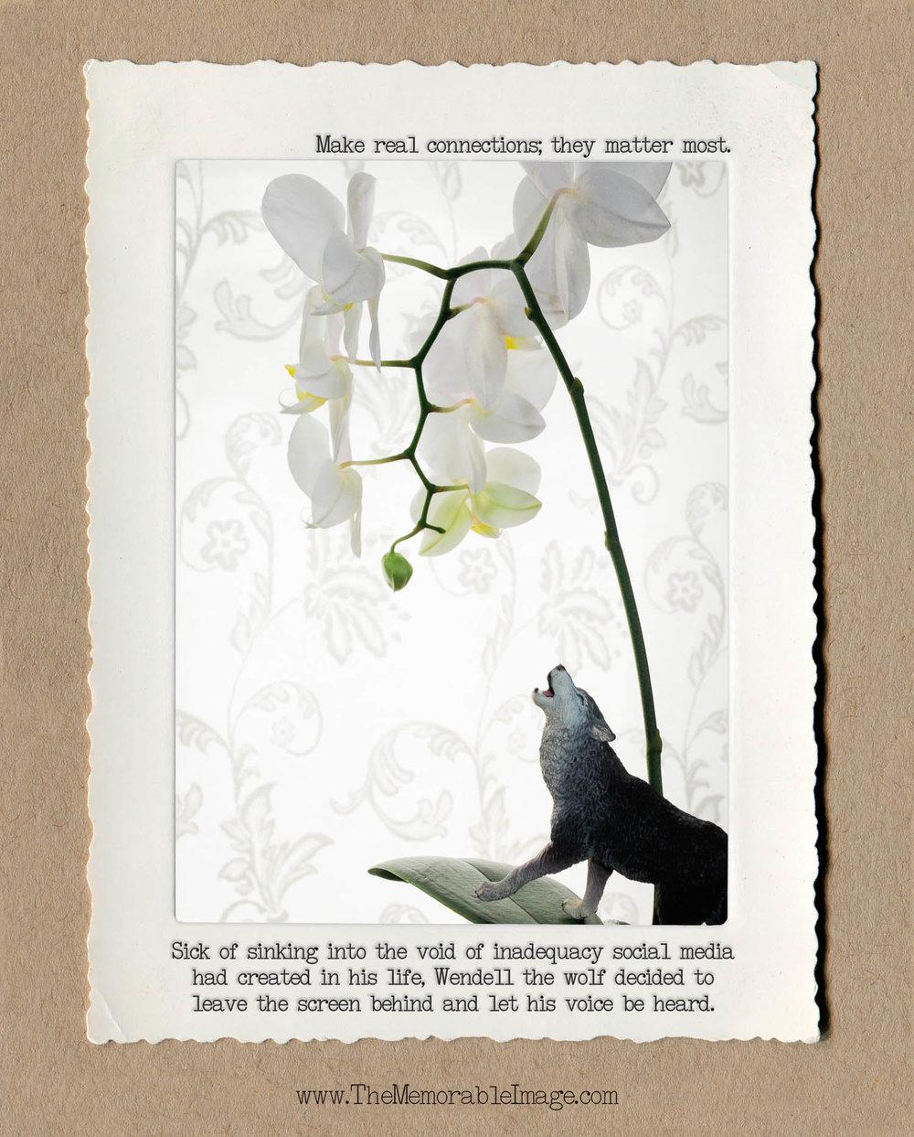 8x10_Vert_Nov_Wolf Orchid.jpg
